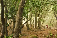 Misty Morning (Tilak Haria) Tags: morning trees india mist nature mumbai matheran golddragon abigfave karmapotd