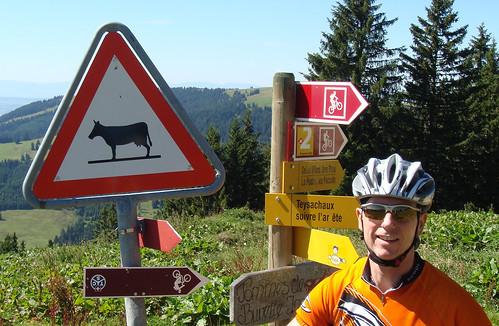 Beware of Cows!