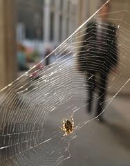 Businessman behind web