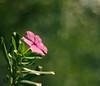 HBWE (Victor Oliveira) Tags: flower verde green 50mm purple bokeh flor roxa vision1000 visiongroup vision100