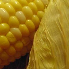 Corn Porn