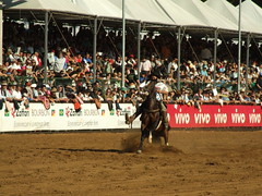 Freio de Ouro 2008 (Ivan Bustam@nte) Tags: horse rio de caballo cheval grande do competition pa pferde cavalli cavalo 2009 sul ouro paard equino expointer crioulo freio abccc ivanovbr