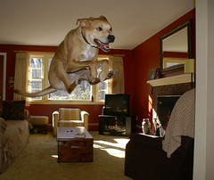 "Sidney can fly! - National Geographic, Your Shot - August 2009 and the cover of Weezer's ""Raditude"" album"