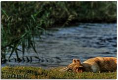 sleep tight (YOUSEF AL-OBAIDLY) Tags: dog nature kuwait hdr الكويت كلب aplusphoto جديليات flickrlovers teacheryousef يوسفالعبيدلي