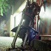 in the shade (F_blue) Tags: abandoned tokyo rust kodak shibuya hasselblad motorbike 渋谷 500cm portra160nc motorbicycle planart c8028 fblue2008