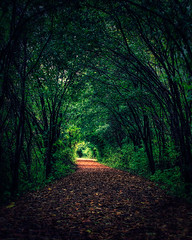 journey ([Adam Baker]) Tags: morning autumn fall nature water forest canon cornell portfolio hdr photomatix 24105l sapsuckerwoods adambaker 40d karmapotd karmanominated natureoutpost