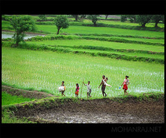 Family Business |  (Intrudr) Tags: family india green field paddy farmers maharashtra panvel justpeople jpfeatured