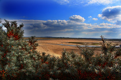 2008_0925_131744 (CrispyBaconBits) Tags: uk sea sky beach clouds canon bush sand unitedkingdom norfolk wellsnextthesea eos400d canon400d canoneos400ddigital crispybaconbits