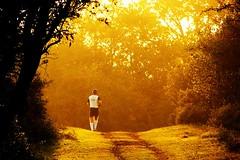 Go for the gold (Johan_Leiden) Tags: autumn fall netherlands forest gold walk dunes herfst nederland kpmg jog jogger zonlicht amsterdamsewaterleidingduinen abigfave omot superaplus aplusphoto gettyr