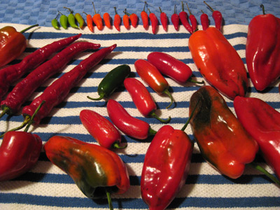 chili drying 1