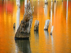 Dead Autumn Forest (Stanley Zimny) Tags: park autumn trees orange reflection tree fall nature water colors leaves automne catchycolors leaf colorful colours seasons natural fallcolors autumncolors fourseasons autumnal ironworks colorexplosion 4seasons naturesfinest mostfav anawesomeshot colorphotoaward top20autumn 100commentgroup vosplusbellesphotos top30greatreflections mfsz