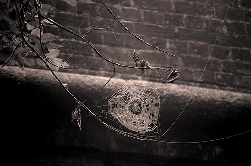 High Cobweb