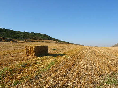 Tras la siega / After the Harvest