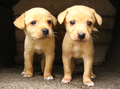 Nice guys (Sebastin-Dario) Tags: dog pet cute beauty animal puppy puppies sleep perro hund beaut cachorro beleza sonno sono mascota animale chiot tendresse bellezza cucciolo mascote sommeil schlaf mascotte welpe ternura maskottchen tenerezza youmakemesmile tierischen zartheit schnheiten superaplus aplusphoto theunforgettablepictures platinumheartaward