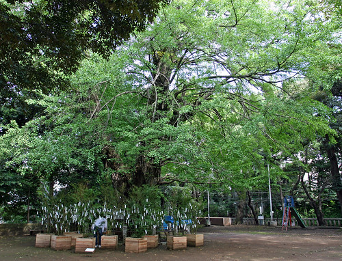 """Wish Tree for peace"" by Yoko Ono - 1"