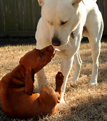 Two Kissing Dogs