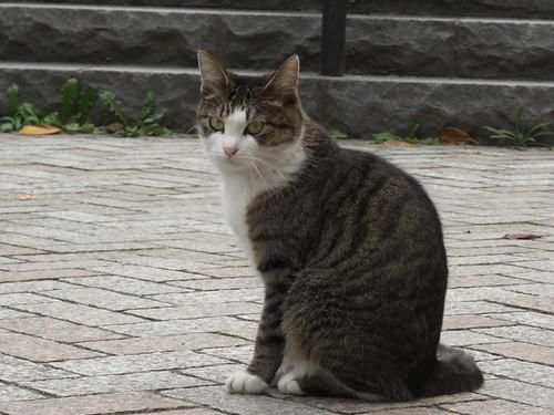 猫@墨田区