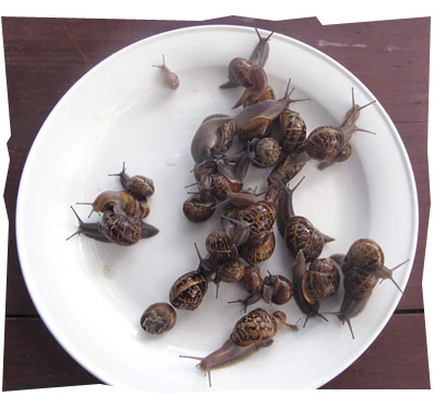 Plate of Snails