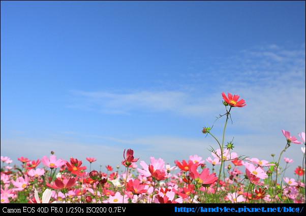 9711新社花海+安妮_009.jpg