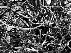 (electricgecko) Tags: tree texture monochrome twigs