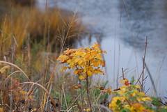 autumn light in Mystic (ledges) Tags: mysticseaport williamscollege williamsmysticfall2008