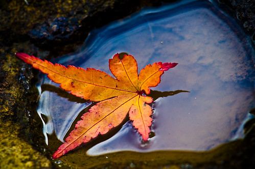 Leaf in puddle #5