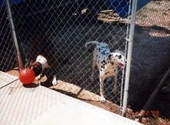Nikki's house (conrado4) Tags: may 1999 nineties may1999
