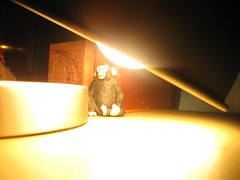 the allmighty lamp (Maicdlphin) Tags: light lamp canon monkey bright powershot a590