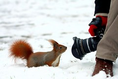 Shoot the squirrel I. (Kristof Borkowski) Tags: canon squirrel handstrap mkus