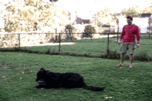 Dog Training Video #2: This Is Not a Toy