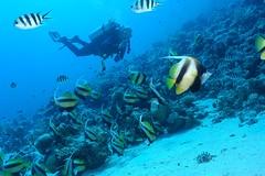 270904 scba du lundi gennis D 101 (olly2001) Tags: egypt scuba diving el gouna