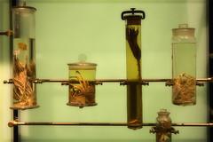 specimens (delgrosso) Tags: science naturalhistory jars madscientist specimens formaldehyde
