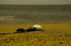 Esperando Iemanj (JAIRO BD) Tags: brazil praia beach brasil sopaulo iemanj litoralnorte naturesfinest oferenda boissucanga abigfave diamondclassphotographer thatsclassy goldstaraward quevidaboaessaviu