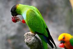 Mayaguez Zoo Puerto Rico Zoo Parrot Rico Mayaguez