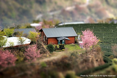 Tilt-shift Miniature Fake │Ching-Jing Farm