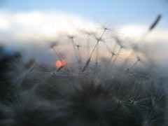 A Dreamy sunset (peggyhr) Tags: blue friends red sky sun nature closeup clouds bokeh oneofakind dandelion seedhead inspire soe gossamerglimpse 0728 50faves passionphotography 25faves mywinners impressedbeauty aplusphoto dailyphotopost globalvillage2 peggyhr lunarvillage bestsunsetandsunrise freenature sunbestsunphotos 200850plusfaves zenenlightenment absolutelyexciting exquisiteimage onceuponatimefairytalegroup favesextreme050 50faves2008 favesextreme040 exquisiteimage20faves