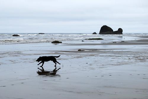 35-Copalis Rock Dog