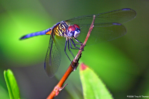 Dragonfly1_052508
