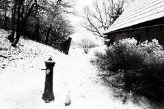 Water under the Snow (Gilderic Photography) Tags: wood roof winter bw white house mountain snow black tree ice water fountain montagne fence landscape lumix bush eau europe frost village unesco panasonic chalet slovensko slovakia neige paysage past blanc gel glace oldtime ruzomberok pompe blueribbonwinner slovaquie vlkolinec abigfave gilderic aplusphoto diamondclassphotographer flickrdiamond