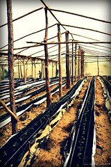 Plantacion el tomate (Juan Job) Tags: june canon tomato xt juan dom rep tomates co 2008 job junio tomate jun kj caribe jjjj toato jji jjir jarabcoa