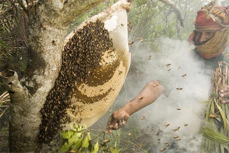 Collecting Honey, Sundarban Forest, Bangladesh, 2007
