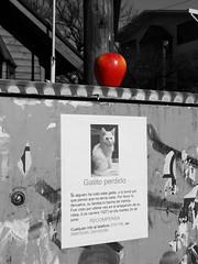 .su.victima. (Jose Bernabe) Tags: apple manzana sony coutout dsch3