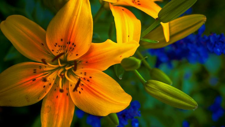 Cheater HDR Flower