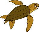 turtle (3doel82) Tags: fish bird animals insect gambar koleksi ikan belajar burung binatang carnivora serangga mamalia amphibi
