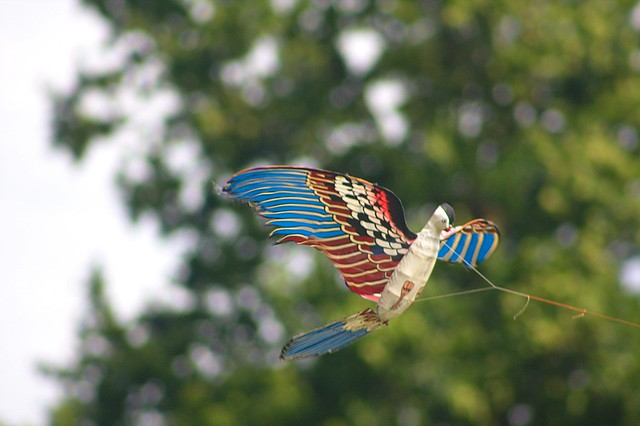 Kite Festival - Bird