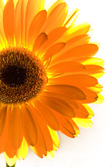 SunShine (Fahad Al Nusf) Tags: birthday uk orange sun flower macro me sunshine yellow digital manchester high nikon key asia shine gulf britain flash great middleeast ku arab micro happybirthday highkey kuwait 2008 fahad kw arabiangulf q8 essam kwt alnusif sb800  18200mm  nikon18200mm d80 freephotos  nikond80 882008 080808 fenyn fahadalnusf alnusf  flickrlovers  nusef nusif alnusef fahadessamalnusf essamalnusf alnisef alnisf nisf nisef nikonr1c1wirelesscloseup