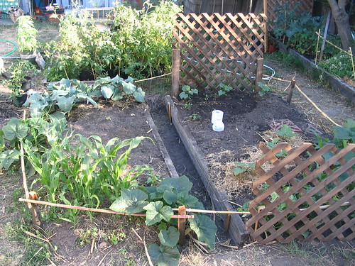 cucumbers, radishes, corn, squash, broccoli, honeydew, eggplant, lettuce, dill, chives, peppers