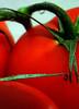 tomate 03 (-Merce-) Tags: red food naturaleza nature catchycolors tomato interestingness rojo comida vivid tomate brillo solanum catchycolorsred jitomate interestingness310 eligetucolor mmbmrs