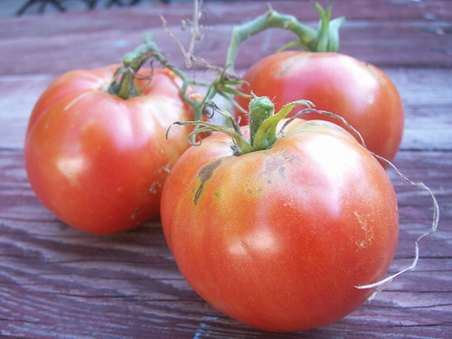 organic big boy tomatoes
