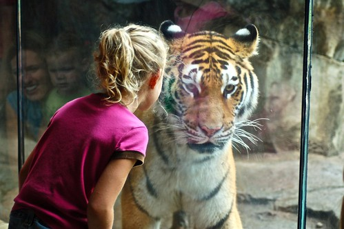Ava and tiger